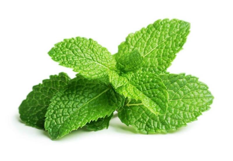 Dùng một số dược liệu giúp trẻ giảm đau và cải thiện tình trạng hơi thở có mùi