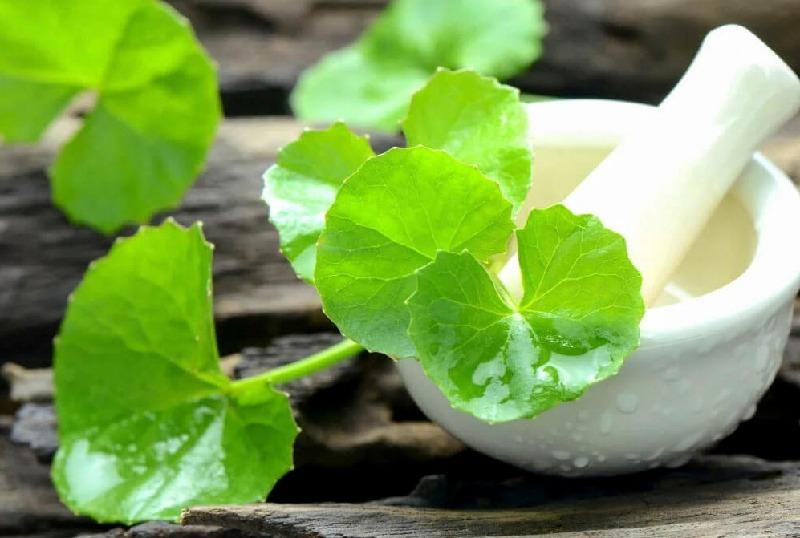 Bài thuốc với cây hương nhu và rau má chữa viêm lợi sưng má hiệu quả