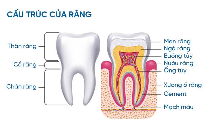 Men răng được cho là phần cứng nhất trên cơ thể người