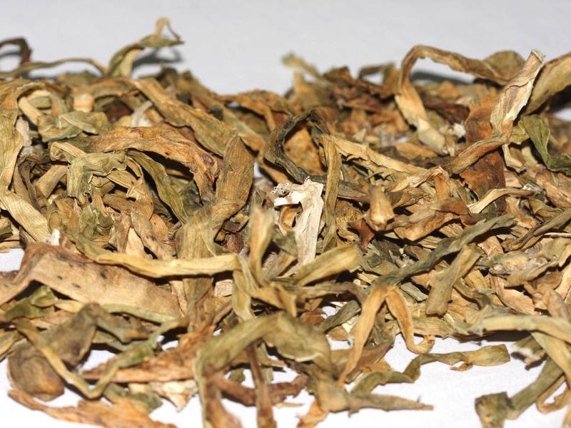 Áp dụng cây lược vàng chữa đau răng tuyệt đối không kết hợp với thảo dược khác