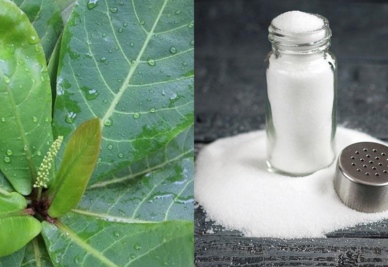Kết hợp lá bàng và muối để mang lại hiệu quả tốt nhất
